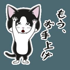 [LINEスタンプ] にゃんちょこりん【白黒ハチワレ猫】