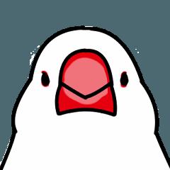 [LINEスタンプ] かわいい白文鳥の日常スタンプ